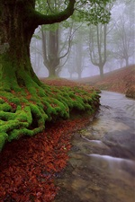 Preview iPhone wallpaper Spain, Basque country, trees, moss, stream, summer