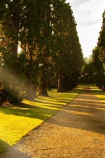 Preview iPhone wallpaper Sunlight, park alley, trees, road, grass