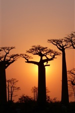 Preview iPhone wallpaper Trees, baobabs, sky, light, dusk