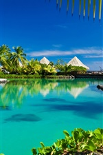 Tropical, paradise, palm trees, sea, ocean, beach, sunshine