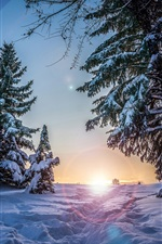 Preview iPhone wallpaper Winter, snow, spruce trees, sunset, night