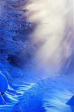 Winter, thick snow, trees, sunlight