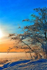 Winter, trees, snow, sunset, blue sky