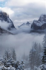Preview iPhone wallpaper Yosemite National Park, USA, California, trees, mountains, winter, snow, fog