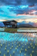 Asia farm, plantation, rice, hut, beautiful scenery
