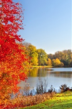 Autumn park, lake, trees, leaves, nature scenery