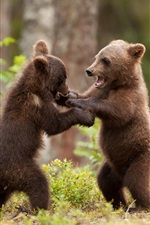 Preview iPhone wallpaper Bear cubs play game, forest