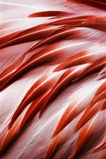 Preview iPhone wallpaper Bird, flamingo feathers