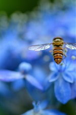 Preview iPhone wallpaper Blue hydrangea, petals, flowers, insect, bee
