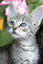 Preview iPhone wallpaper Cute kitten, basket, pink rose