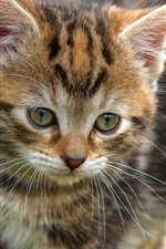 Preview iPhone wallpaper Cute kitten, face, eyes, bokeh