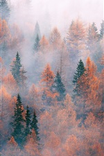 Preview iPhone wallpaper Forest, trees, fog, autumn