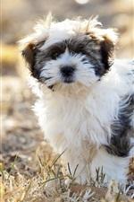 Preview iPhone wallpaper Furry dog, grass, bokeh
