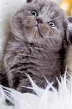 Gray gato, gato branco, bolas de Natal
