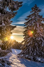Preview iPhone wallpaper Grenchenberg, Switzerland, forest, winter, snow, sunset