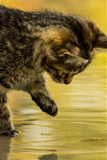 Preview iPhone wallpaper Kitten touch water