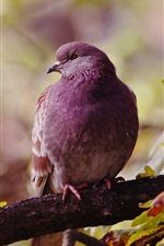 Preview iPhone wallpaper Lonely bird, dove, autumn, leaves