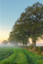 Preview iPhone wallpaper Nature scenery, fields, trees, mist, morning, summer