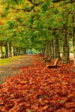 Preview iPhone wallpaper Park, trees, red leaves, road, bench