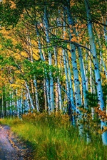 Preview iPhone wallpaper Road, birch grove, trees, autumn