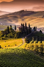 Preview iPhone wallpaper Tuscany, Italy, fields, hills, trees, sunrise, morning
