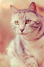 Preview iPhone wallpaper White cat, eyes, whiskers, grass, blur