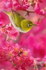 Preview iPhone wallpaper White-eye birds, red flowers, tree