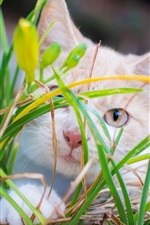 Preview iPhone wallpaper White kitten hidden in grass