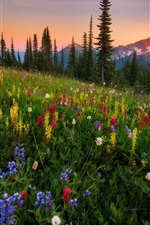 Preview iPhone wallpaper Wildflowers, mountains, sunset, nature landscape