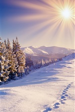 Preview iPhone wallpaper Winter, snow, forest, trails, mountains, sky, sun