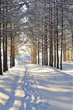 Winter, snow, trees, forest, road