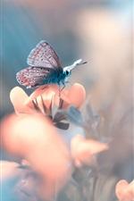 Butterfly, flower, bokeh