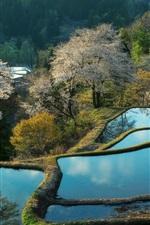 China bela paisagem, campo de arroz, água, árvores, de manhã