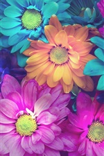 Preview iPhone wallpaper Colorful daisy flowers, pink, blue, orange