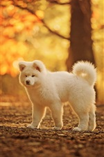 Preview iPhone wallpaper Cute white dog, autumn, trees