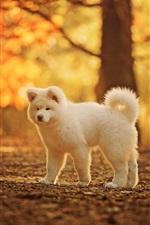 Cute white dog, autumn, trees