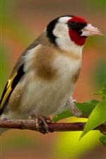 Preview iPhone wallpaper Goldfinch, bird, branches, leaves