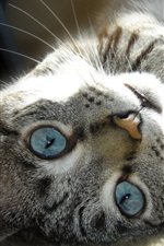 Preview iPhone wallpaper Gray cat lying ground, face, eyes, whiskers
