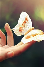 Preview iPhone wallpaper Hand, fingers, butterfly