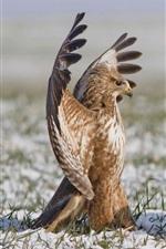 Preview iPhone wallpaper Hawk, birds, wings, dance