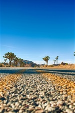 Preview iPhone wallpaper Joshua Tree National Park, California, USA, road, trees, sky