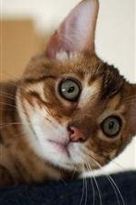 Espreitar Kitten
