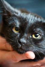 Preview iPhone wallpaper Little black cat, hand
