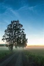 Preview iPhone wallpaper Road, fields, grass, fog, trees, dawn