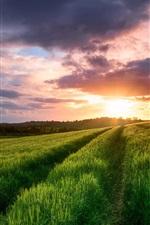 Sky, clouds, sunset, spring, fields