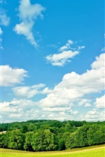 Trees, grass, blue sky, white clouds, summer
