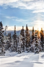 Preview iPhone wallpaper Trysil, Norway, winter, snow, forest, trees, spruce, sun