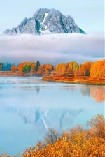Preview iPhone wallpaper USA, Wyoming, Grand Teton National Park, trees, fog, autumn