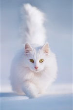 Preview iPhone wallpaper White fluffy cat, yellow eyes, snow, winter