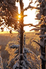 Preview iPhone wallpaper Winter, forest, trees, snow, Finland